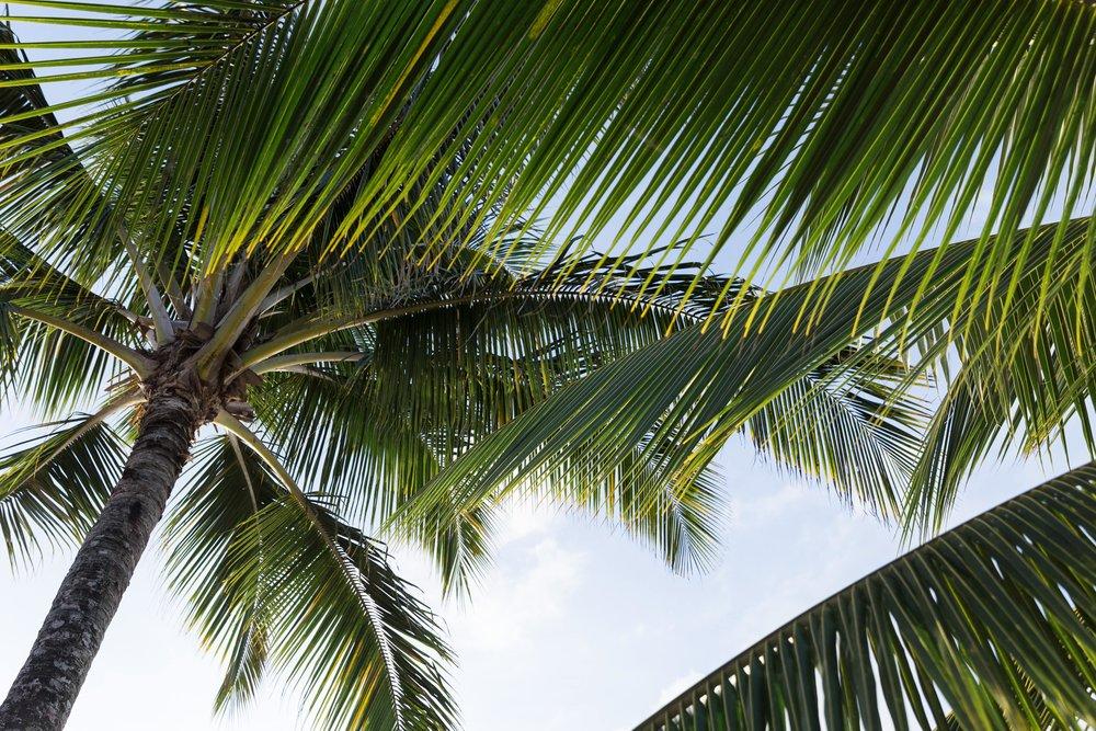 hawaii271-min.jpg