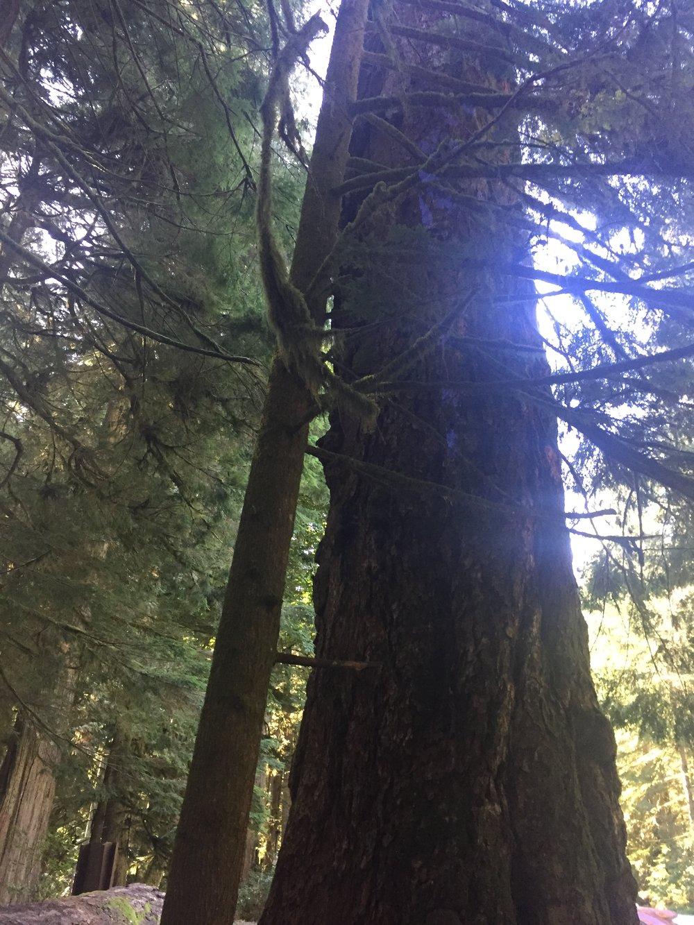 pic of tree for nov blog.JPG