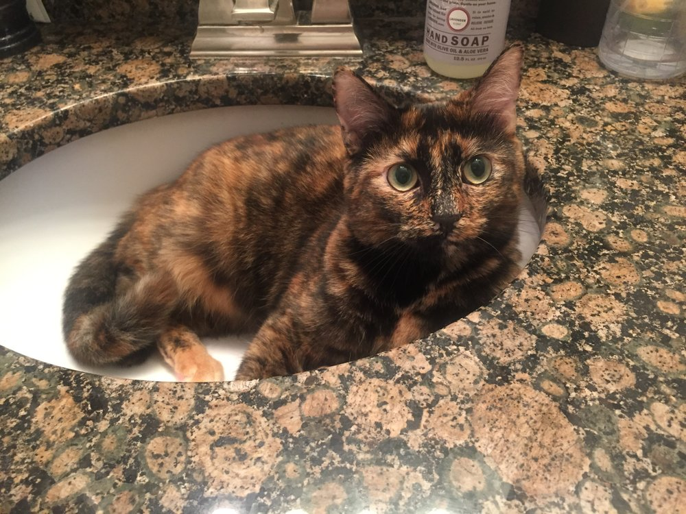 "Dora, in her infamous role: ""Camouflage Kitty in the Sink"""