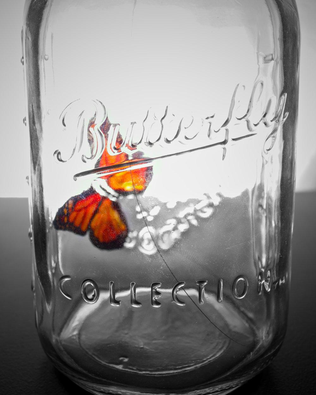 butterfly-2_8399855362_o.jpg