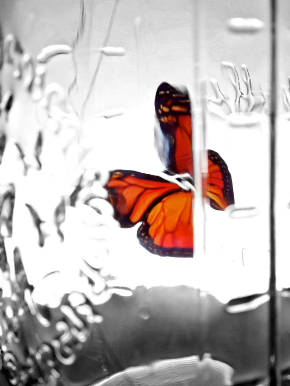 butterfly-6_8399856106_o.jpg