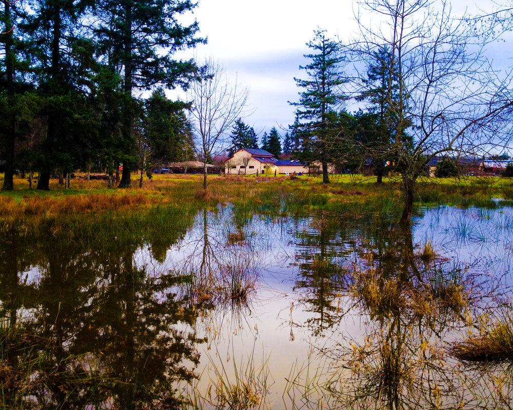 flooded_14140321997_o.jpg
