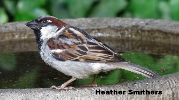 heather smithers.jpg