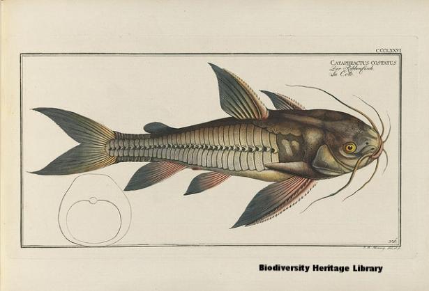 Biodiversity Heritage Library.jpg