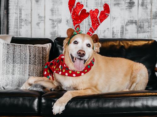 Christmas themed studio portrait taken by Orlando Pet Photography at West Elm Orlando-5.jpg