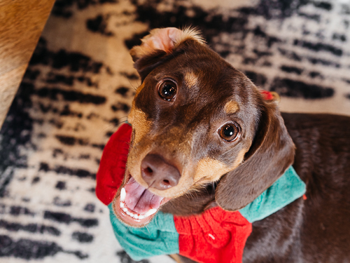 Christmas themed studio portrait taken by Orlando Pet Photography at West Elm Orlando-6.jpg