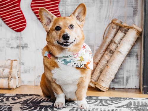 Christmas themed studio portrait taken by Orlando Pet Photography at West Elm Orlando-13.jpg