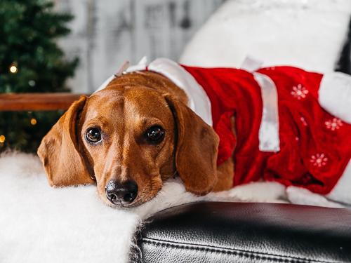Christmas themed studio portrait taken by Orlando Pet Photography at West Elm Orlando-29.jpg