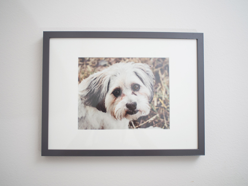 IMage-of-a-framed-print,-one-of-the-products-offered-by-Orlando-Pet-Photography.jpg