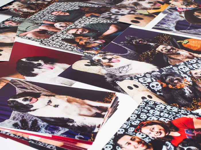 Image of a collection of random prints taken by Orlando Pet Photography