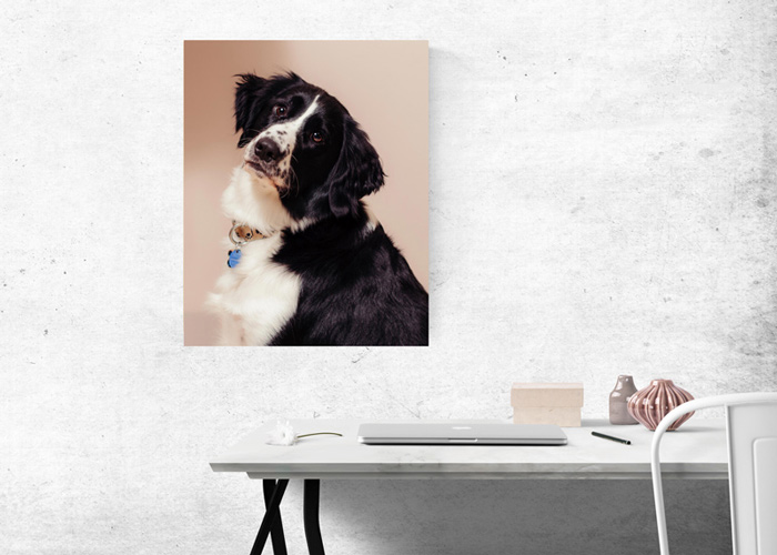 Image of wall art showcasing a puppy taken by Orlando Pet Photography