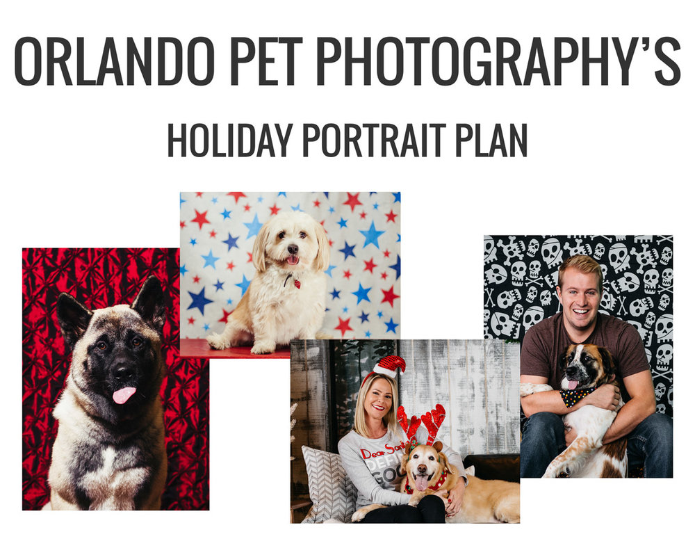 Collection of images advertising Orlando Pet Photography's Holiday Portrait Plan