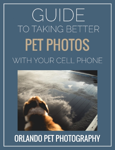 Image of Orlando Pet Photography's Guide To Taking Better Pet Photos With Your Cell Phone