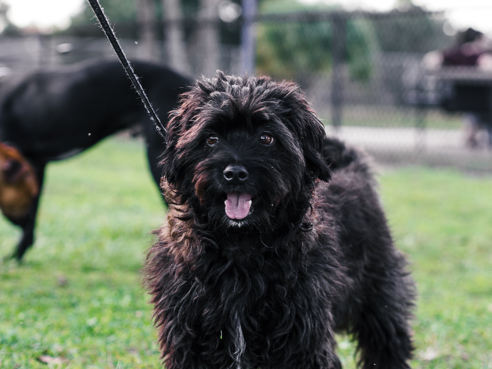 Picture of a black dog enjoying the outdoors taken by Orlando Pet Photography.jpg