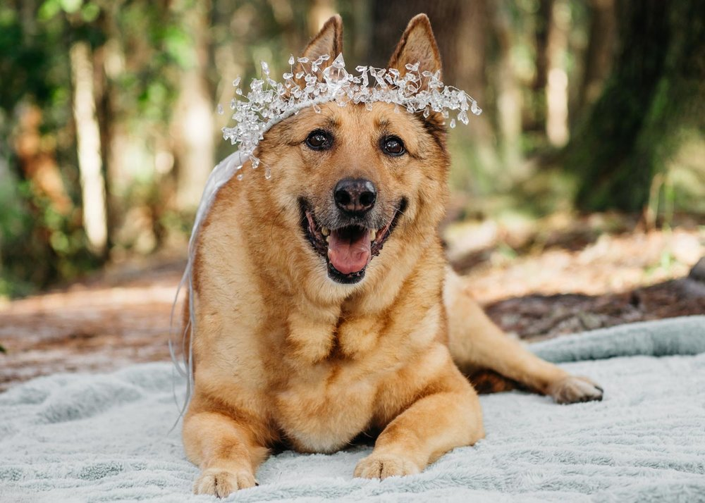 A-portrait-of-Riley-sitting-in-a-forest-with-a-fashion-crown-on-her-head-taken-by-Orlando-Pet-Photography.jpg
