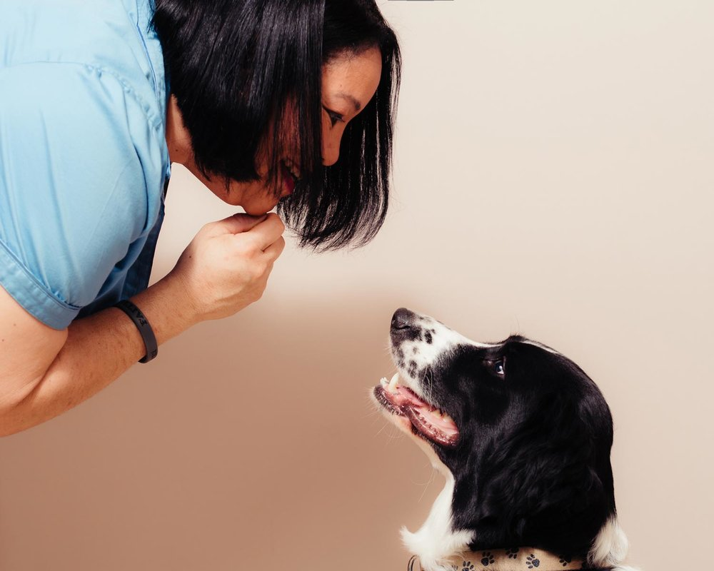 Portrait-image-of-a-woman-and-her-Springer-Spaniel,-Danny-taken-by-Orlando-Pet-Photography.jpg