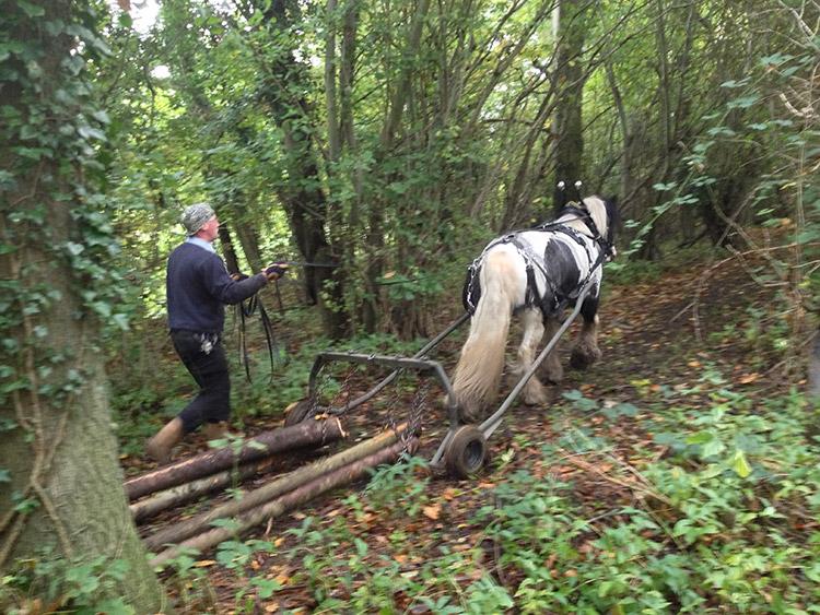 horse_logging_01.jpg