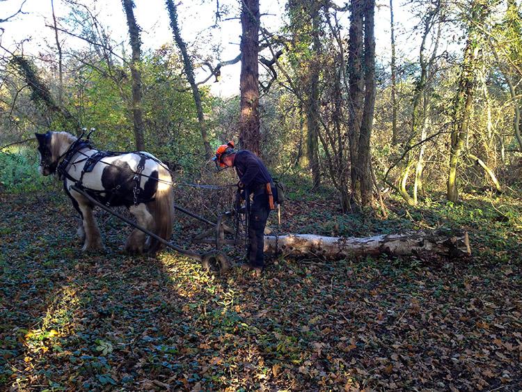 horse_logging_02.jpg