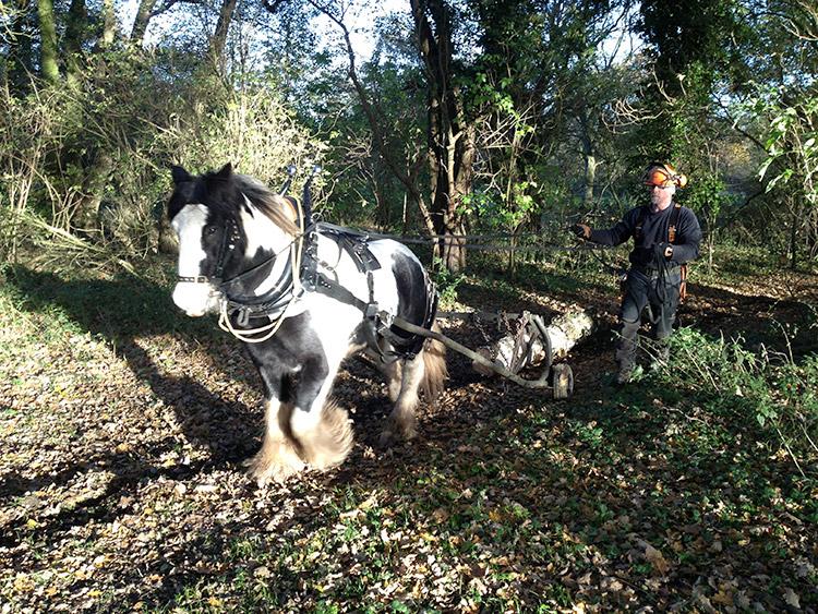 horse_logging_03.jpg