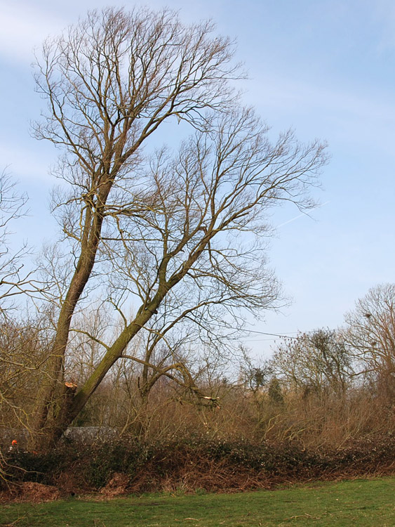 tree_felling_01.jpg