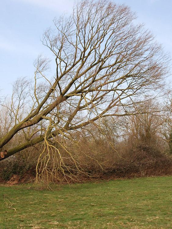tree_felling_02.jpg