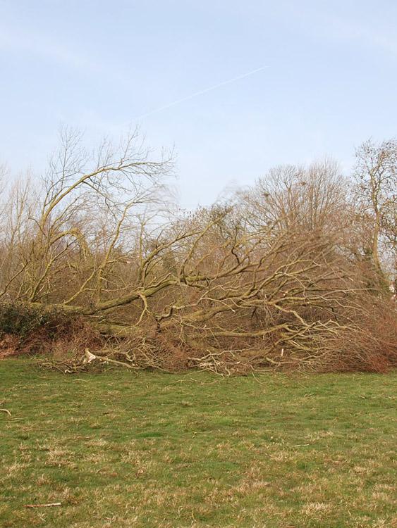 tree_felling_03.jpg