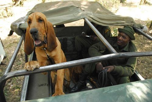 dog-unit-1.jpg