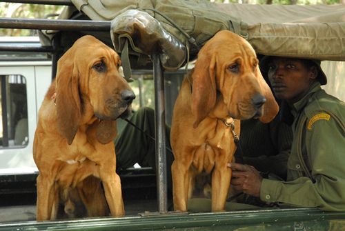 dog-unit-2.jpg
