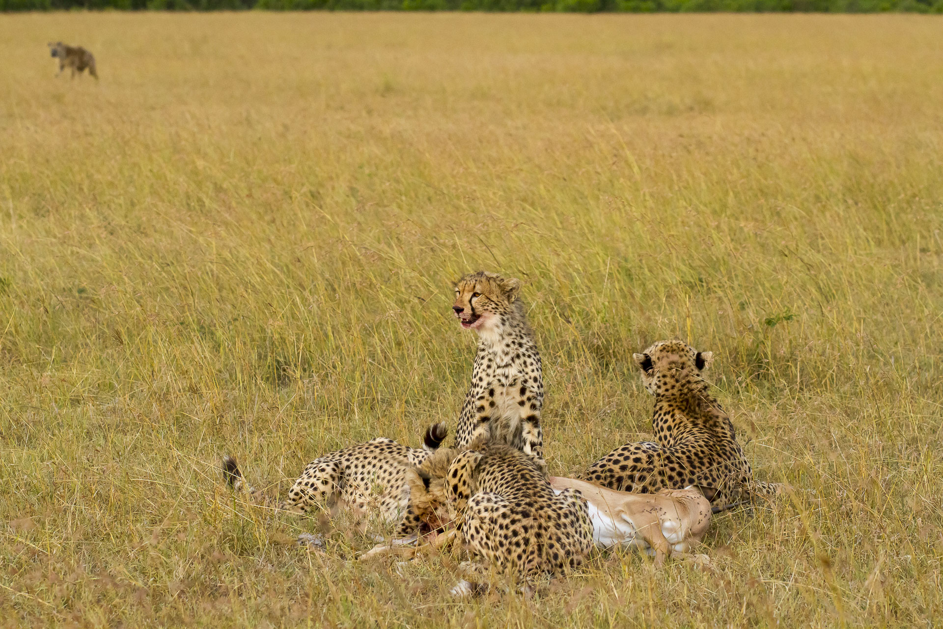 August 2006 — Mara Conservancy