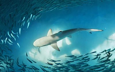 Shedd Aquarium Science Pub: Shark Trivia at Trader Todd'sTUESDAY, July 24 @ 7:30 pm - ~