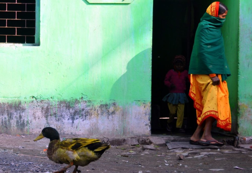 painted house, painted duck in Bodhgaya.JPG