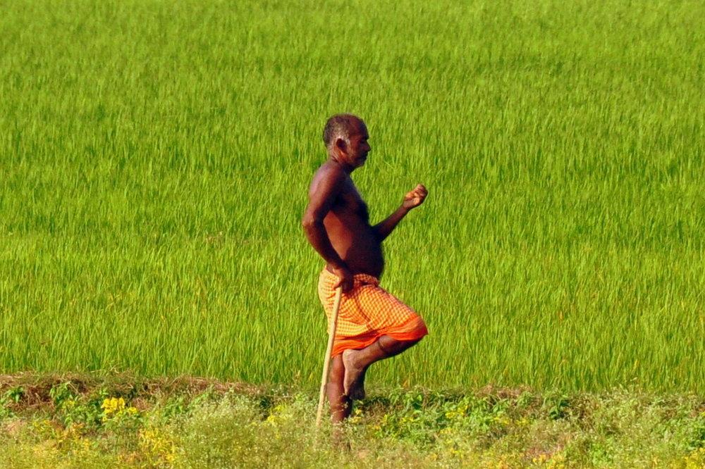 man working the fields near Bodhgaya.JPG
