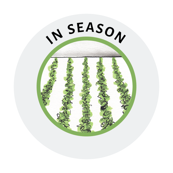 icon-in-season-website.png