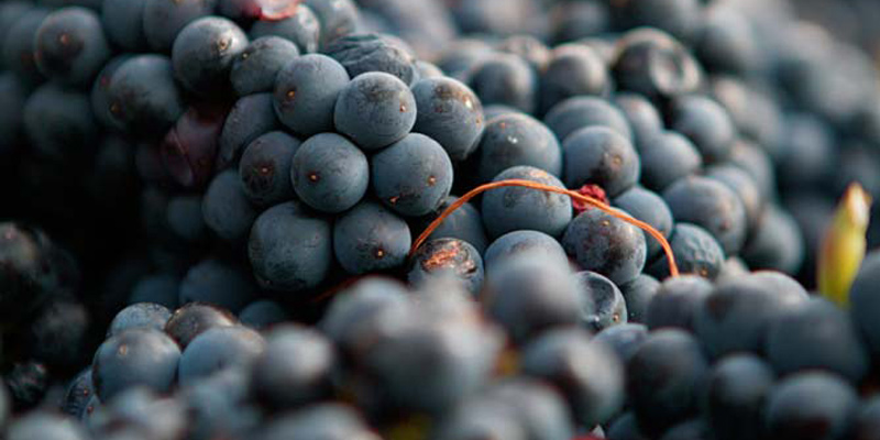 serendipity-winery-naramata-bench-okanagan-valley-vagabonds