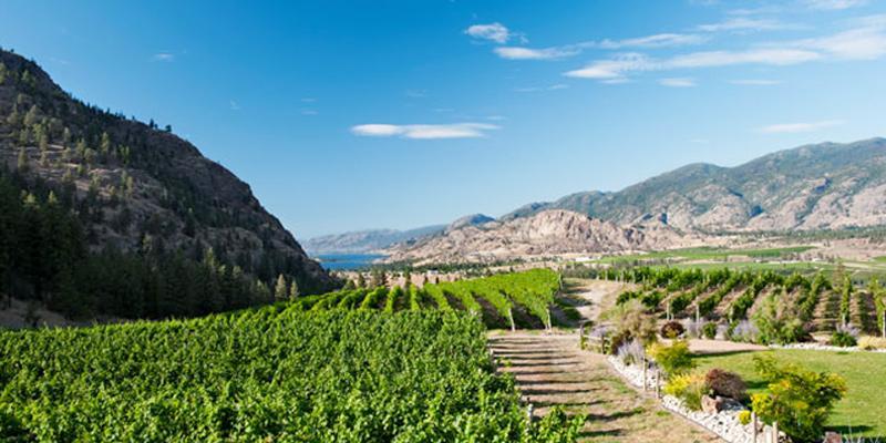 see-ya-later-wines-okanagan-falls-valley-vagabonds