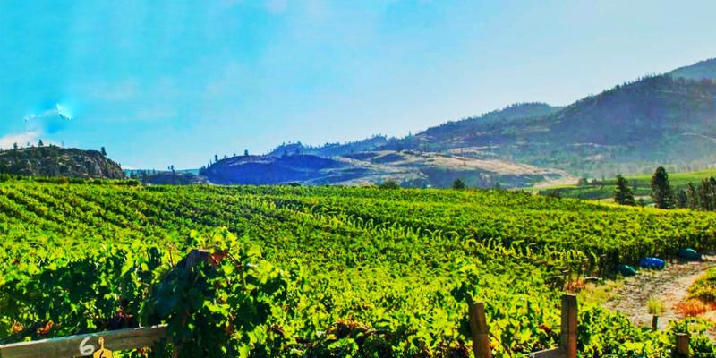 stags-hollow-winery-okanagan-falls-valley-vagabonds