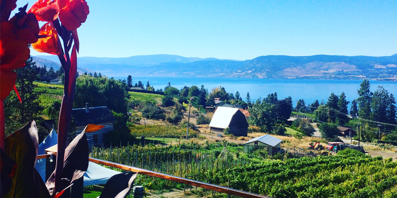 summerhill-pyramid-winery-kelowna-okanagan-valley-vagabonds