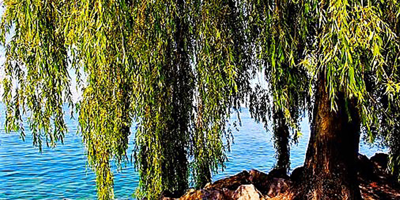 willow-beach-west-kelowna-okanagan-valley-vagabonds