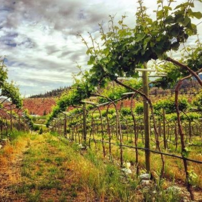 Photo Credit Nobel Ridge Vineyard and Winery