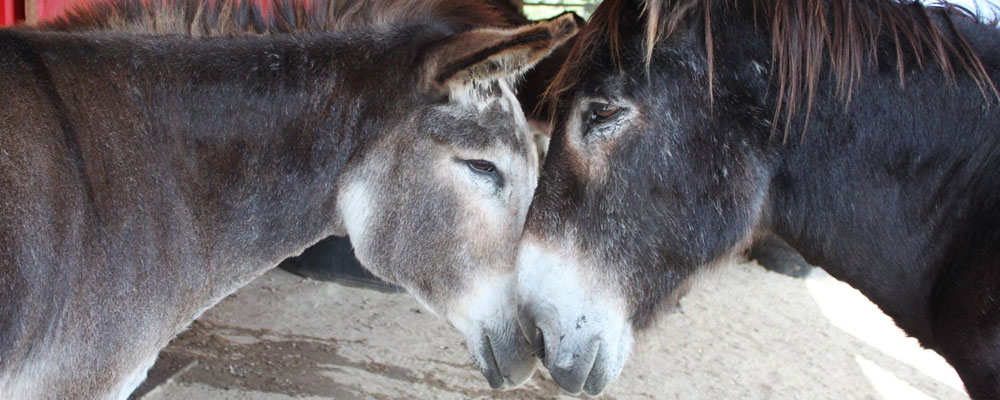 PC: Turtle Valley Donkey Refuge