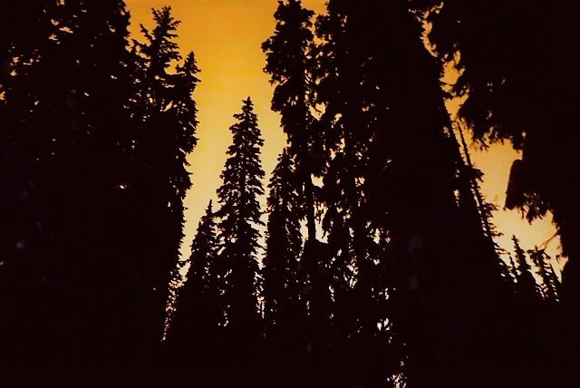orange trees.png