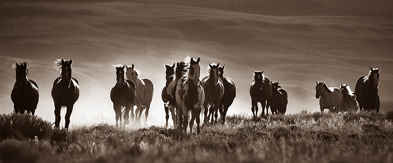 """Stampede"" © Lisa Cohen, Silver Mountain Studio"