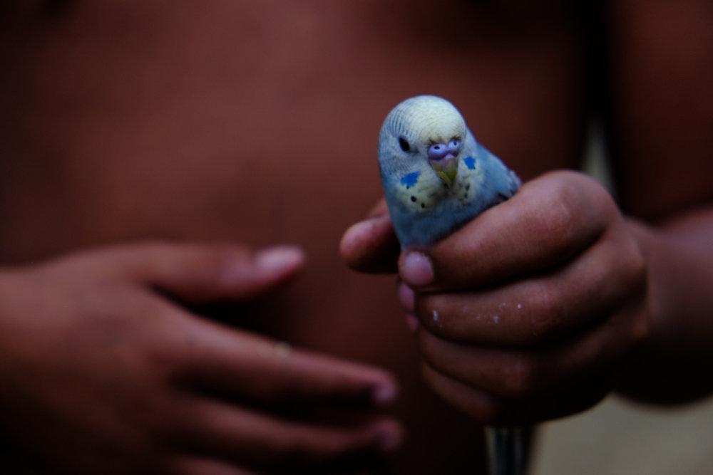O Menino e O Pássaro, VidaEmTerra, Ilhabela-SP, 2015