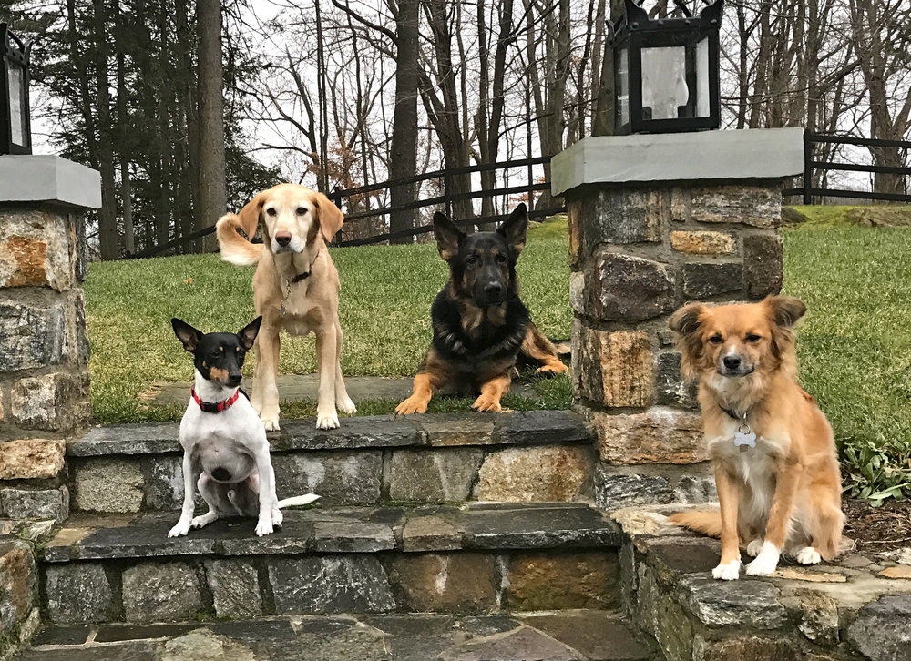 The Pedowitz family's pups (L-R): Oliver, Chace, Logan and Loki