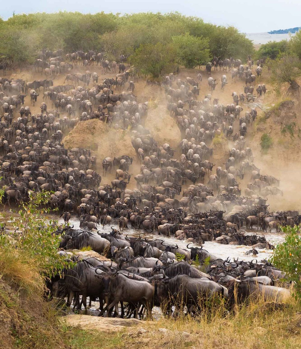 great-migration-wildebeest-africa