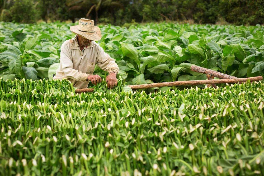 cuba-tobacco-farmer.jpg