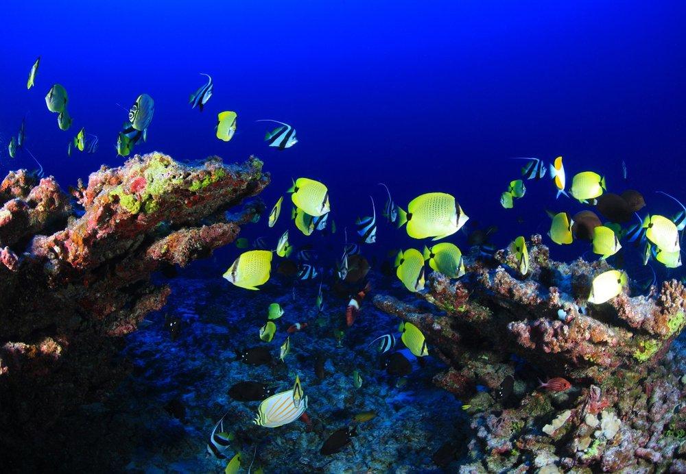 fish-reef.jpg