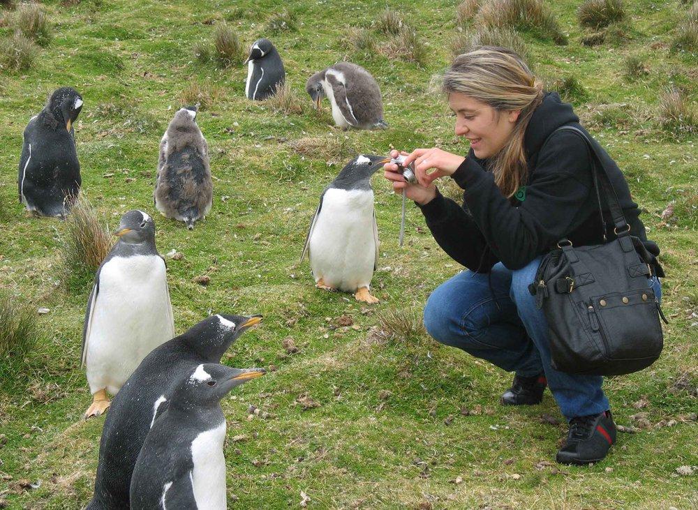 penguins-elisa-falklands.jpg