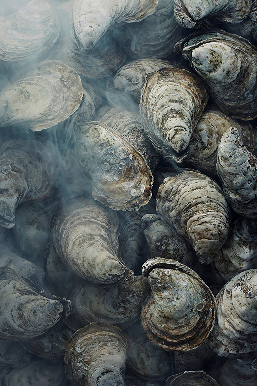 134_OYSTERS_103.jpg