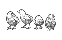 Birds 1500-01.png